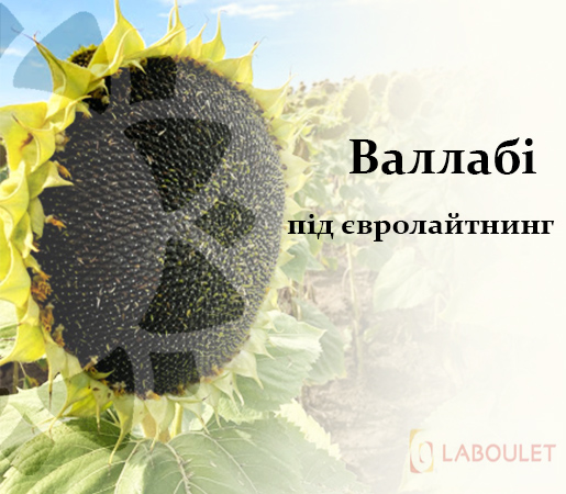 Валлаби